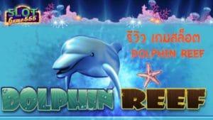 รีวิวเกม Dolphin Reef